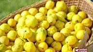 Labas veselības pamatā – veselīgu, bioloģisku produktu lietošana uzturā: Izstāsti Latvijai – Veselības receptes