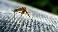 """""""Ekoell"""" krēms odu un ērču atbaidīšanai"""
