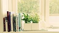 Veselīgi augi, ko vari izaudzēt mājās
