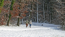 Kā pastaiga mežā var uzlabot fizisko un garīgo veselību? Stāsta ārsts