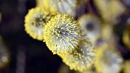 10 ieteikumi, kā cīnīties ar pavasara alerģijām