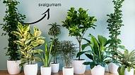 Kuriem augiem noteikti jāatrodas tavā istabā?