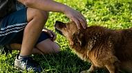 Suns, kurš ārstē pacientus jeb - kas ir kanisterapija?
