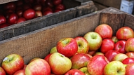 3 iemesli, kādēļ āboli ir vērtīga ēdienkartes sastāvdaļa