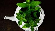 Ar augu spēku un ēdienu pret koronavīrusu