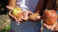 8 ēšanas paradumi, kas kaitē bērna veselībai