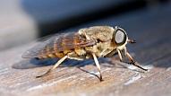 Kā izvairīties no kukaiņu kodumiem?