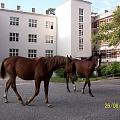 Izjādes ar zirgiem, atpūta Tērvetes dabas parkā