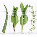 Alternatīvā medicīna, homeopātija